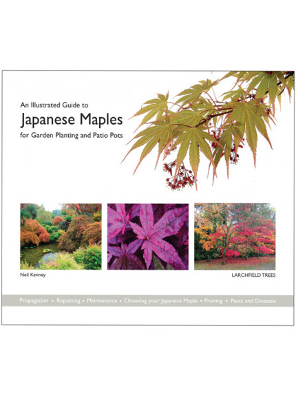 Illustrated Guide to Japanese Maples for Garden Planting and