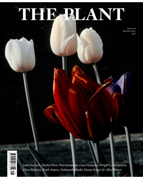 Jack Davison (tulips) cover